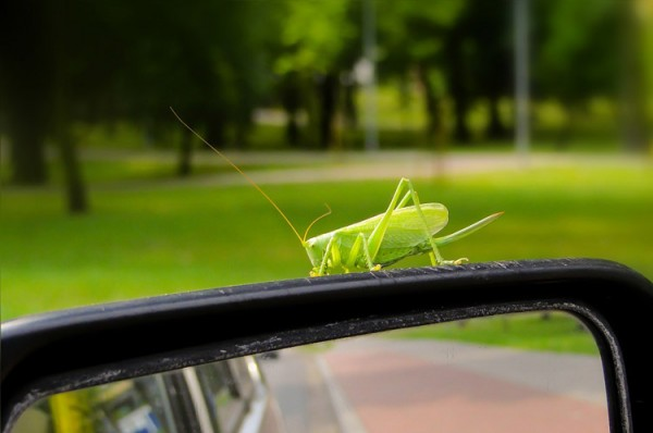 insektenentferner-autolack-onlineshop-ladengeschaeft-hannover